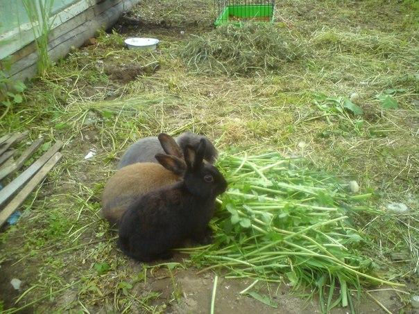 Кролики и натуральное питание