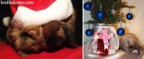 кролики-новый-год