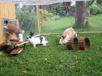 кролики в уличном вольере